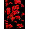 Red Red Roses (Original)