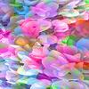 Enchanting Multicolors (Original)