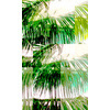 Palm Sunday (Original)