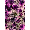 547 Violet Daisy Print (Original)