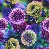 Photographic Dahlia Floral (Original)