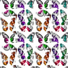 Butterfly Collection (Original)