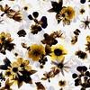 Botanical Flowers (Original)