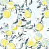 Citrus Blossom (Original)
